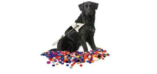hond-doppen-720x340